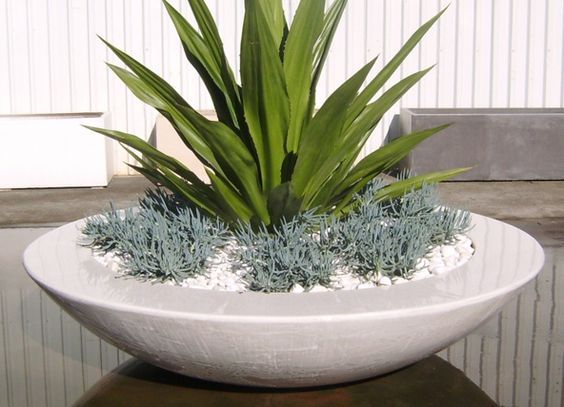 Image result for small contemporary plant to put in a modern garden plantpot on…
