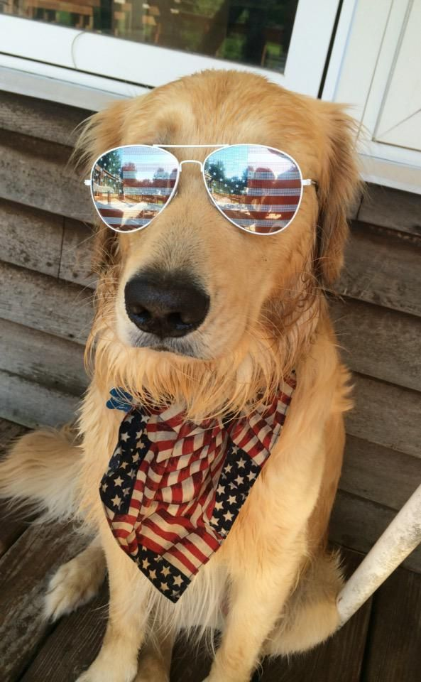 Delightful 40 Funny And Cute Pictures Of Animals Wearing Glasses. Find This Pin And  More On July 4th Pet ...