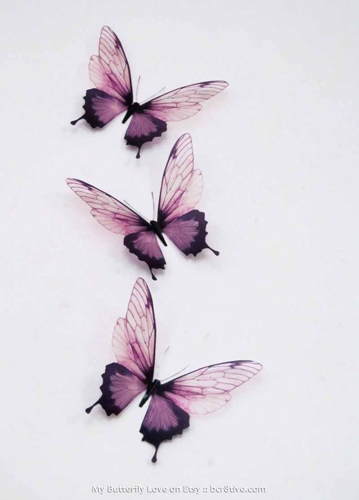 Butterfly Wall Art by MyButterflyLove on Etsy                              …
