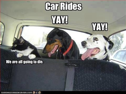 yep. My animals do the same thingFunny Animal Pictures, Funny Pictures, Funny Cat, Funnyanimal, Dogs Cat, Pets, Cars Riding, So True, Roads Trips