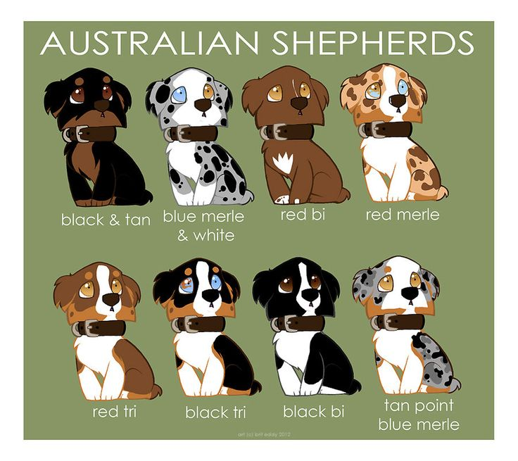 Love their colors :)  Australian Shepherd Color Patterns by briteddy.deviantart.com