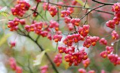 Im Garten und in der Natur gibt es viele Pflanzen, die schön aber giftig sind – und einige sehen essbaren Pflanzen sogar zum Verwechseln ähnlich! Wir stellen Ihnen die gefährlichsten Giftpflanzen vor.