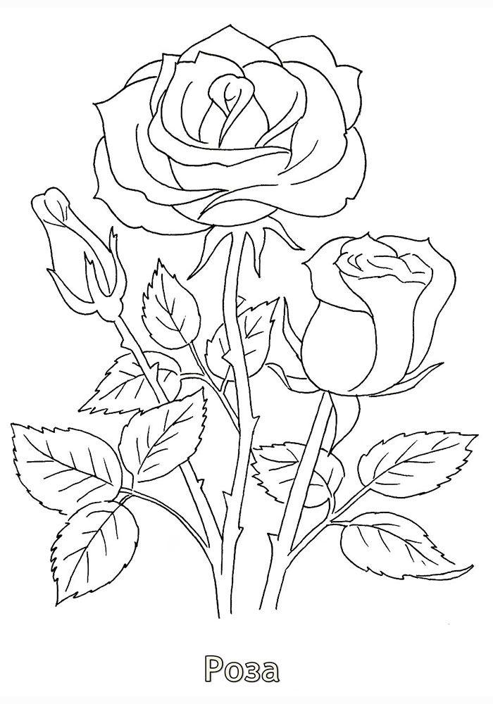 Красивые картинки карандашом распечатать