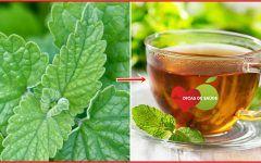 Os 8 Benefícios do Chá de Erva-Gateira Para Saúde