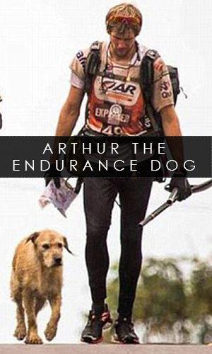 Arthur The Endurance Dog