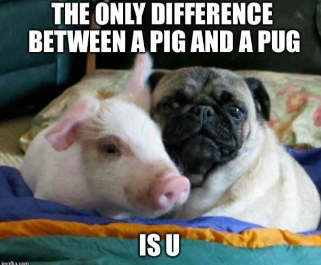 The only difference between a pig and a pug is you / vegan meme / vegan humor / vegan lifestyle /carnnism