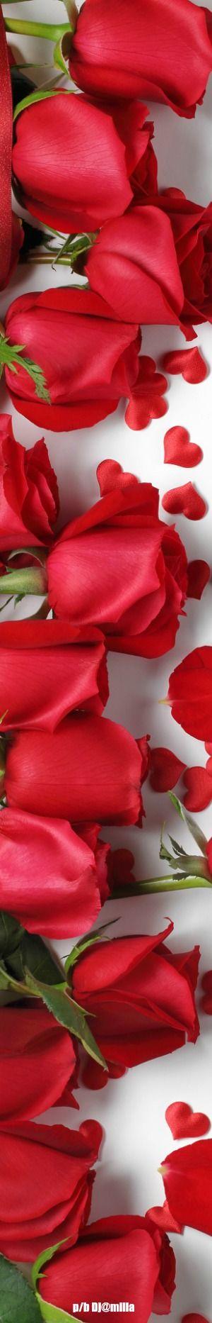 DesertRose,;,beautiful red roses ,;,