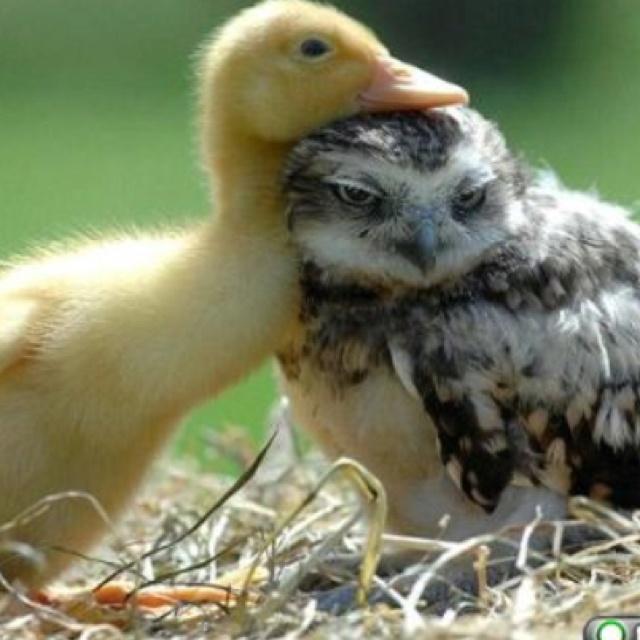 17 Best Images About Pet Friendly Flooring On Pinterest: 17 Best Images About Cute Friendly Animals On Pinterest