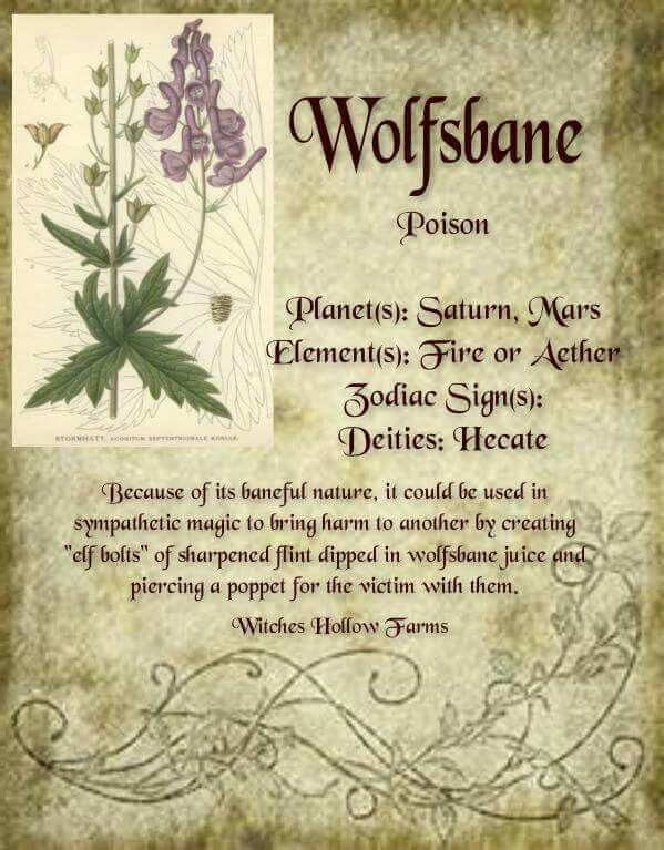 Wolfsbane - Pinned by The Mystic's Emporium on Etsy                                                                                                                                                      More