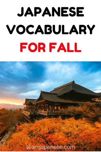Japanese autumn words! Seasons are very important in Japan. Japanese people honour the changing seasons with special food, drink, festivals and customs. And of course, there are special seasonal words too! Increase your Japanese vocabulary with this list of Japanese words and phrases for autumn and fall. Click through to the blog post on Team Japanese to learn more autumn Japanese words now!