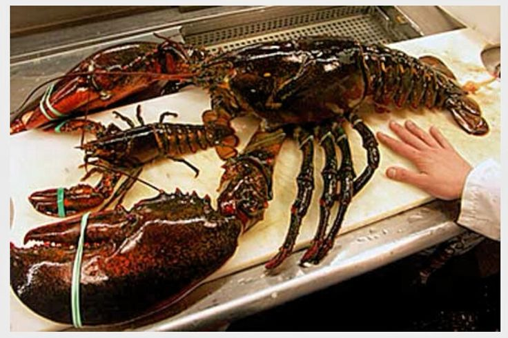 Giant Lobster: Amazing! Lol!  [news.nationalgeographic.com]