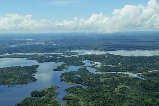 #AmazonrRainforest