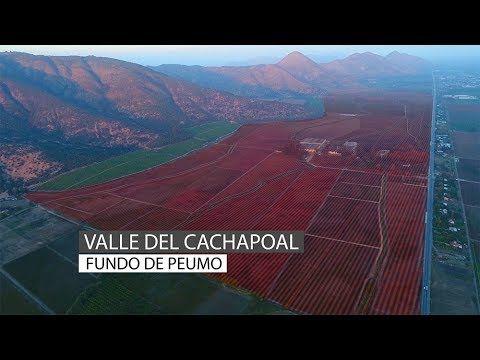 2017 Harvest: Discover the secrets of Peumo