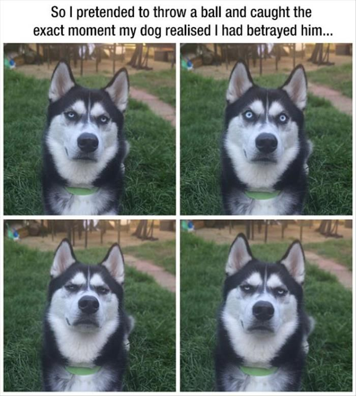 Funny Animal Pictures Of The Day - 20 Pics