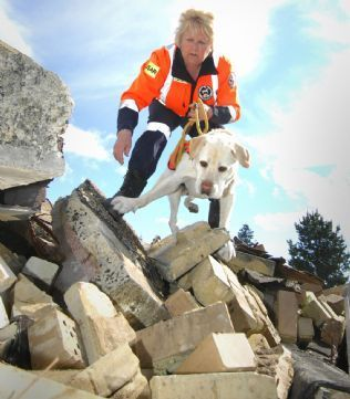 Found you: Labrador River, 7, like all Search And Rescue Dogs, are trained to find lost or trapped victims.