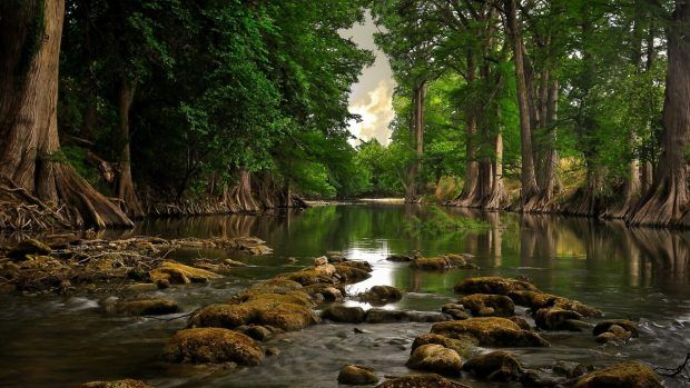 1366 X 768 Hd Wallpapers Landscape Wallpaper Nature Wallpaper Forest Photography
