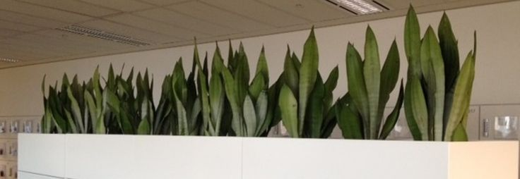 We are having a very good experience of this field. We do not only provide the products on rent, but also provide the services of maintenance. http://www.indoor-plants-melbourne.blogspot.com.au/2014/12/very-amazing-idea-to-give-your-place-a-natures-touch.html