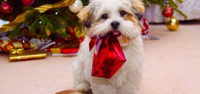 Cute Dog Christmas wallpaper