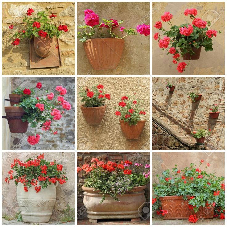 Geranium Flower, Tuscan Decorating, Terracotta Can, Tuscany Italy, Photo  Collages, Tuscany Italy, Geraniums, Pots, Branches