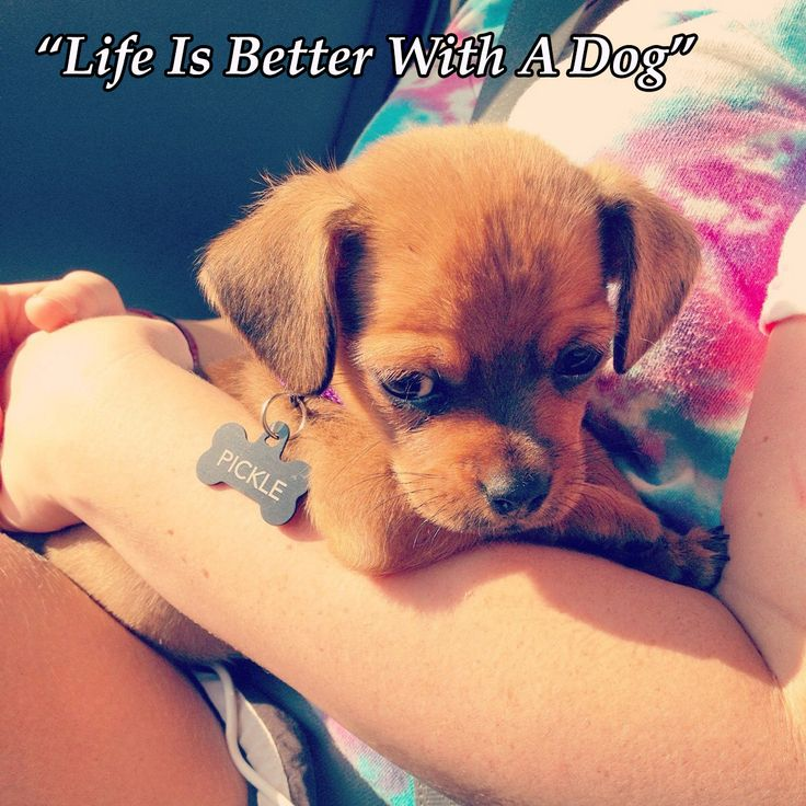 Quotes About Anger And Rage: Best 25+ Cute Dog Quotes Ideas On Pinterest