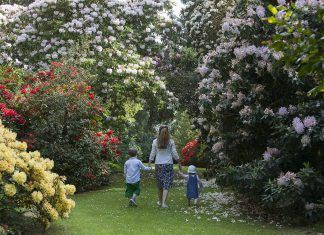 All Rhododendrons Lead to Dumfries and Galloway – Festival celebrates Scotland's 'Second National Flower'