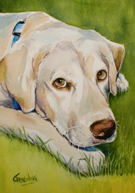 Yellow Lab with beautiful eyes in the grass by Christy Dekoning