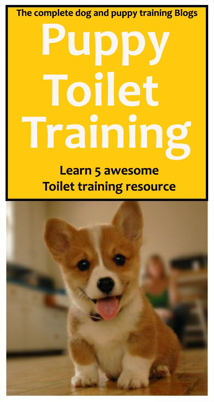The complete dog and puppy training blogs, learn 5 Awesome puppy toilet training #dogtraining #dog #dogs