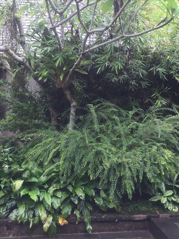 Below temple tree