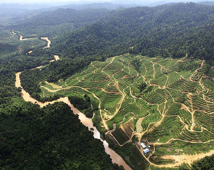 deforestation_in_borneo_by_palm_oil_plantations.jpg (800×636)