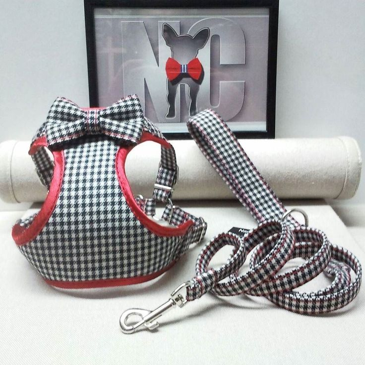 [English below]  Pechera en pata de gallo con bies y correa a juego una combinación estupenda para perros pequeños y gatos [] Houndstooth pattern on this biased front harness with leash. A perfect match for small dogs and cats.  #arnes #harness #dog #cat #perros #gatos #instadog #chihuahua #caniche #frenchie #teckel #shihtzu #leash #customized #yorkie #perrosdeinstagram #perrosgram #dogstagram #gatosdeinstagram #pug #terrier