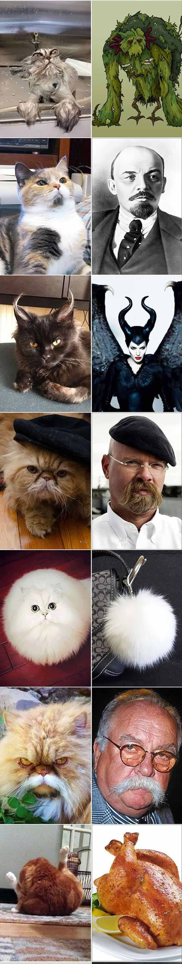 You Know You've Been On The Internet To Long When Cats Start Looking Like Everything...