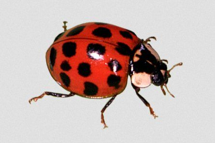 Not all Bugs are Bad - Lady Bugs are good https://t.co/Hb2hFoYOkk