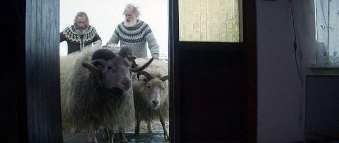 Berani v Besedě. Na odlehlé farmě spolu žijí dva bratři. Kvůli dávné křivdě spolu 40 let nepromluvili ani slovo. Jediné, co je dokáže spojit, je láska k jejich ovcím. Typická islandská černá komedie nadchne každého fanouška severských filmů, dnes v Kině Beseda od 18:30.