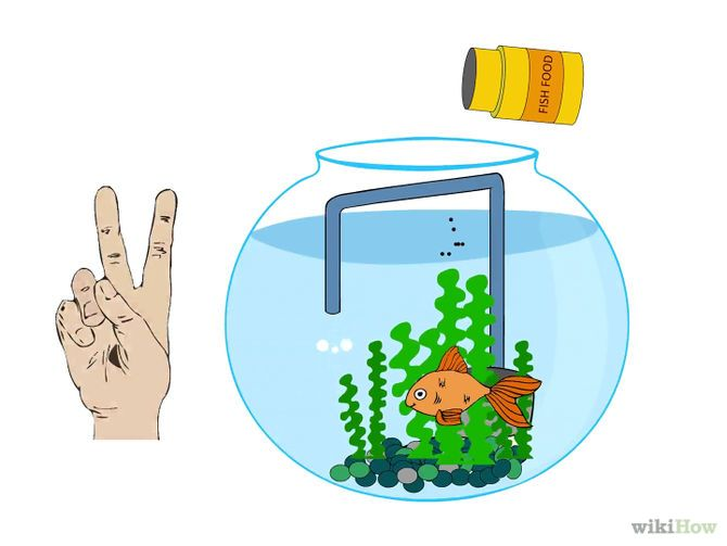 Care for a Fantail Goldfish & How to Do a Fishless Cycle  A fish tank A filter (see tips) A bottle of Household Ammonia (see tips) Test kits for ammonia and nitrite minimum (nitrate is also beneficial). Bucket and siphon for water changes After cycled, fish  http://www.wikihow.com/Do-a-Fishless-Cycle