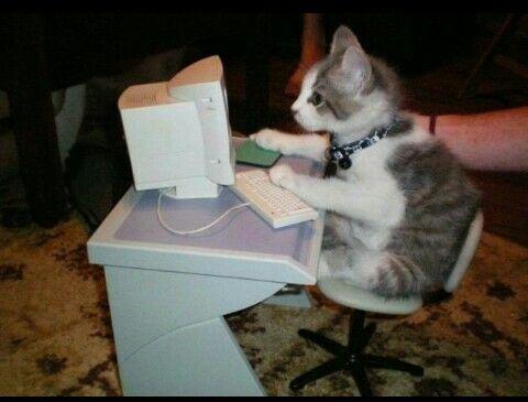 Aaaaa minecraft aaaa ooo un mounstro  gato ponte a estudiar