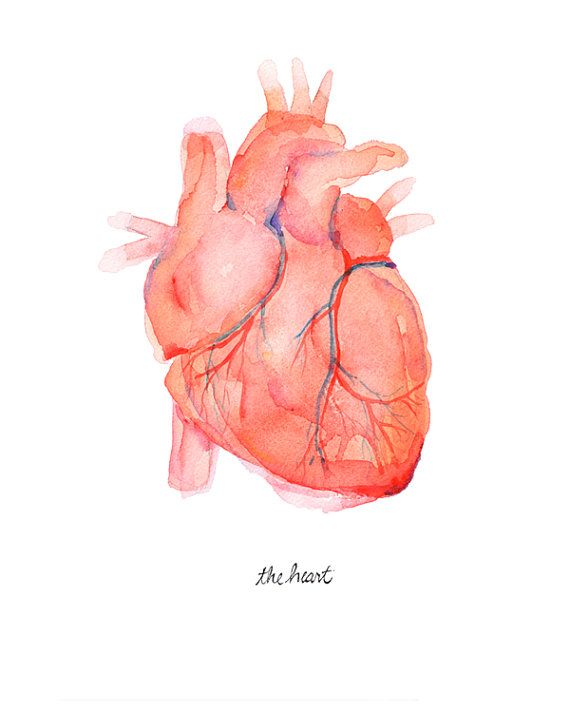 Anatomical Heart Human Heart Print Anatomically by LyonRoad
