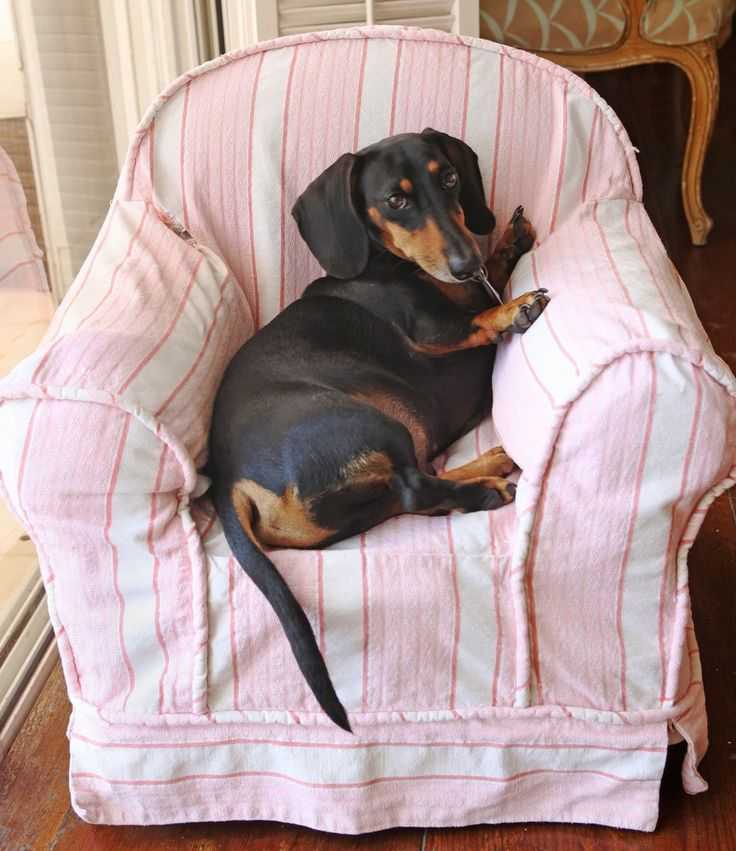 Small chair for a small dog.