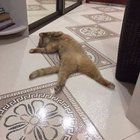 When the house floor is heated in winter...the cat is enjoying Bolly4u