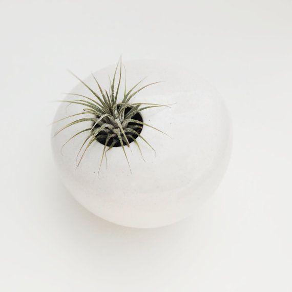 MADE TO ORDER  hängende Wand Pflanzer Air Plant von CeramicScapes