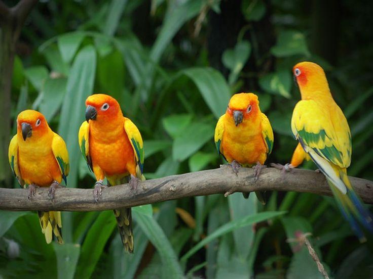 Manjira Wildlife Sanctuary - In Medak, Telangana, India
