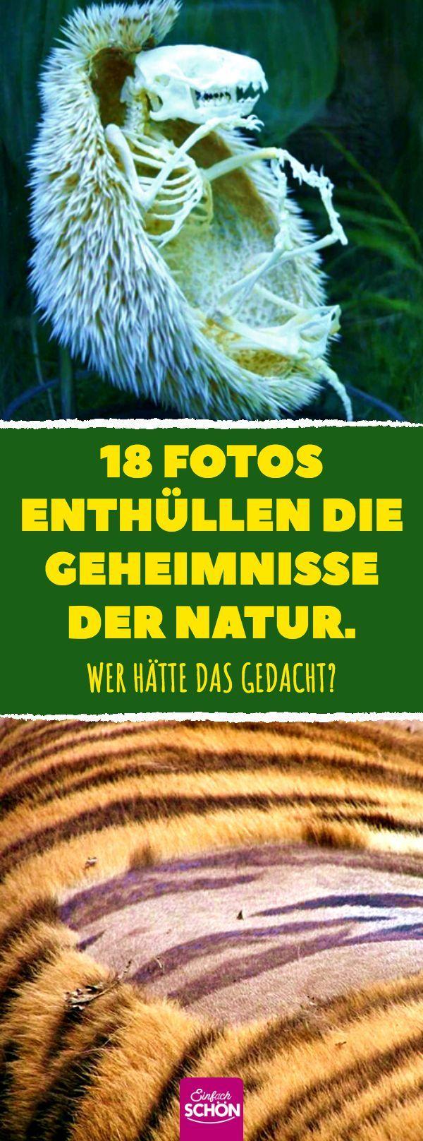 18 Fotos enthüllen die Geheimnisse der Natur. Wer hätte das gedacht? #kuriosit …   – Tiere
