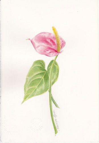 Fleur coupée : l'ANTHURIUM - pas à pas n° 13