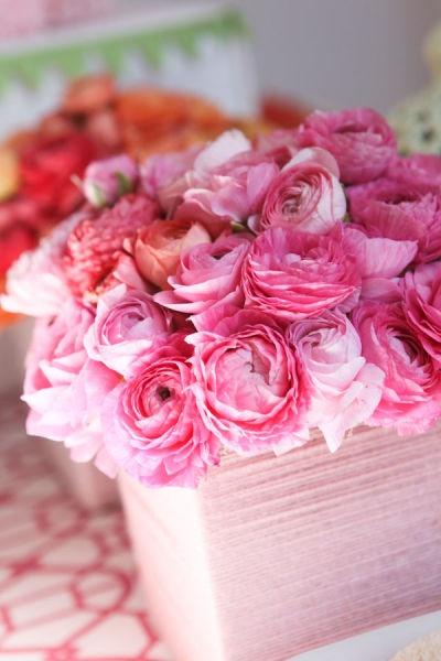 Pink ranunculus in pink #pink #ranunculus #flowers