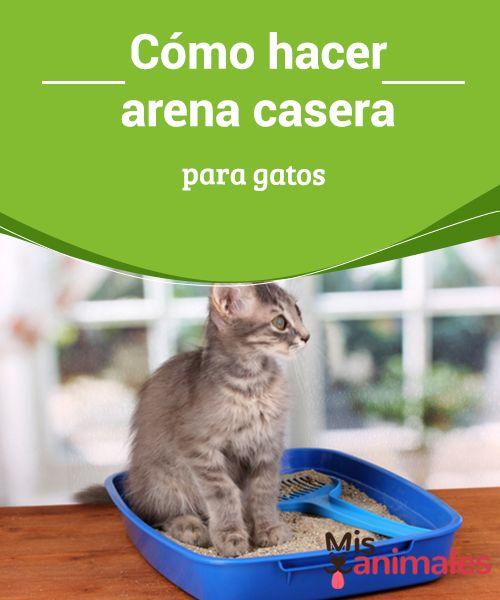 Como Hacer Arena Casera Para Gatos Gatos Arenero Gatos Cuidado