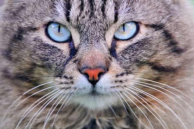 Занимательные и малоизвестные факты о кошках