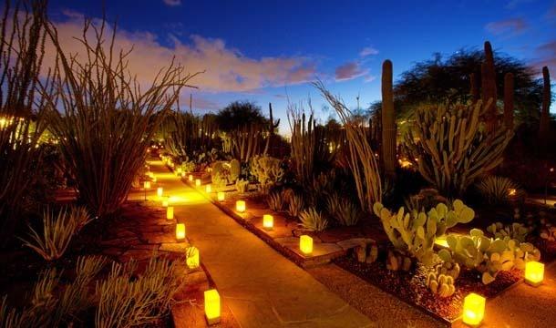 DESERT BOTANICAL GARDEN in Phoenix, Arizona.   Each Season is wonderful!
