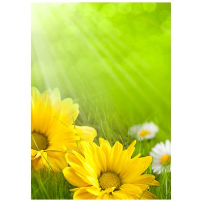 Yellow flower #postcards