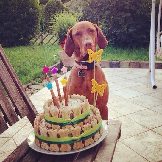 Torta kutyáknak :)