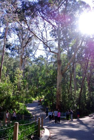 Hiking the 1000 Steps in Melbourne's Dandenong Ranges