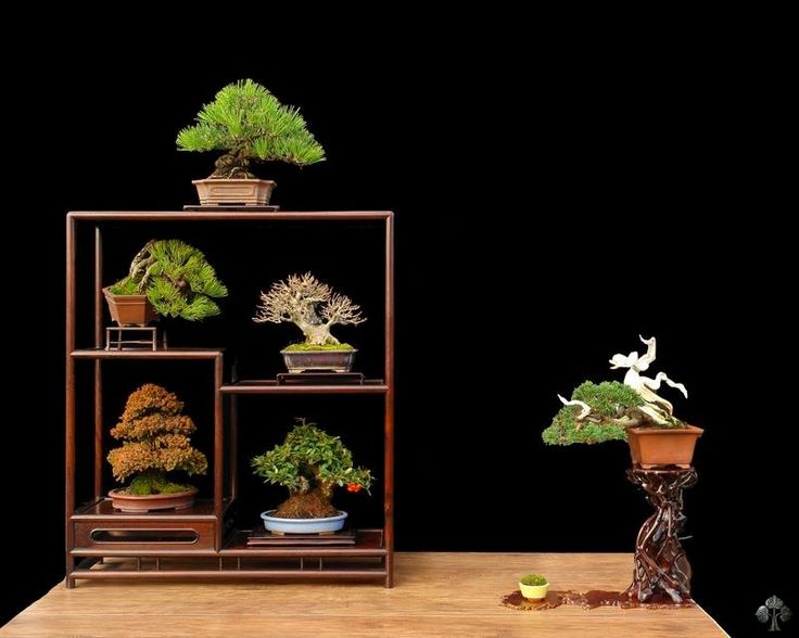 241 besten garten bonsai in schale bilder auf pinterest. Black Bedroom Furniture Sets. Home Design Ideas